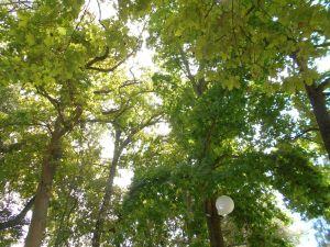Towerbosch