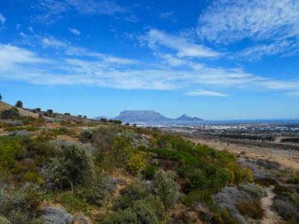 Durbanville Hills - Table Mountain
