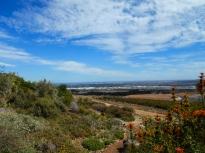 Durbanville Hills - Renosterveld